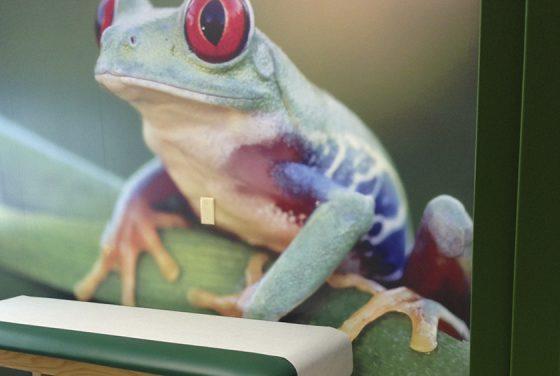 EPO Frog Examining room